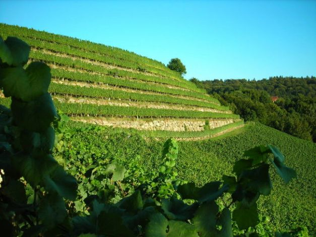 austria single vineyard