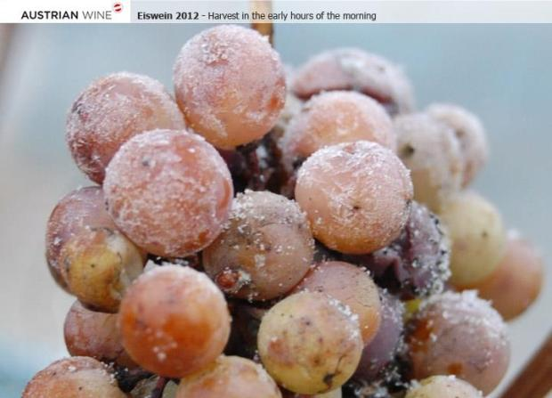 Producing Eiswein demands a great deal of patience. Grapes which are ripe – but not botrytised – wait on the vines for the arrival of the first frosts.