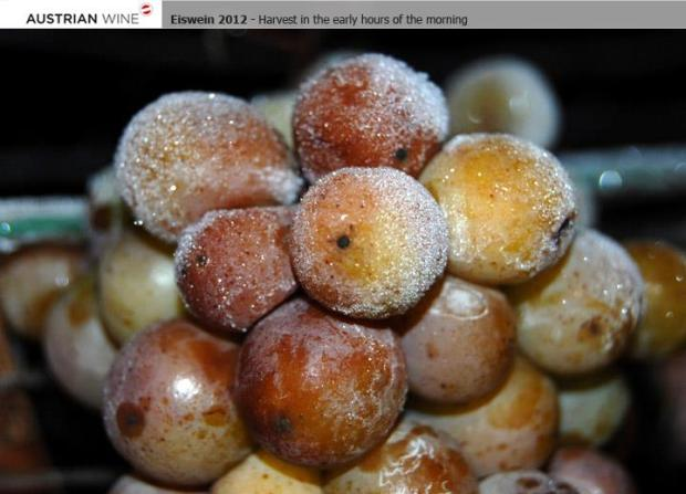 Ultimately, temperatures that are at around – 7 º C (for at least several hours) will freeze the water crystals in the grapes. This is when the grapes must be harvested and pressed. In the press, the water remains as clumps of ice while only the concentrated must flows out.