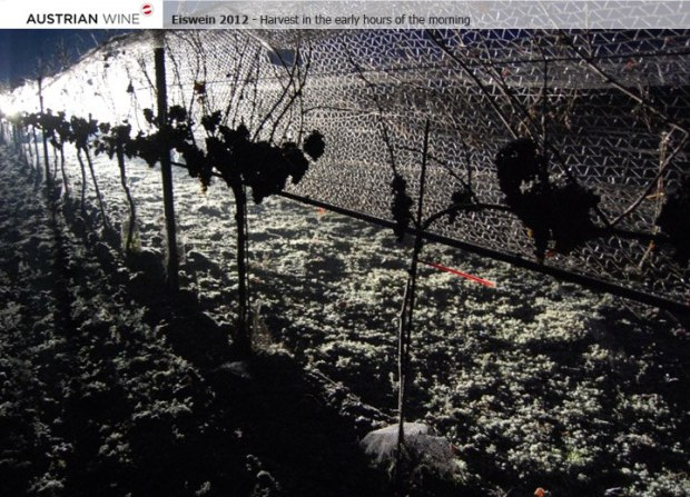 The weather conditions in Austria were perfect to harvest the last grapes in the last days