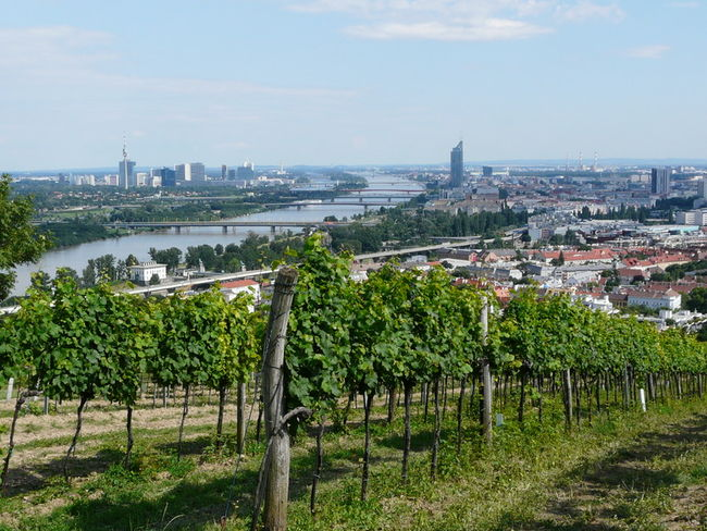 View of Vienna from the Nussberg