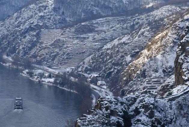 Terraced vineyards in the Wachau