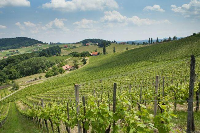 Vineyard in the Steiermark, © AWMB/Bernhard Schramm