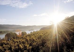 Krems: Gaisberg  Austrian VIneyard © AWMB/Himml